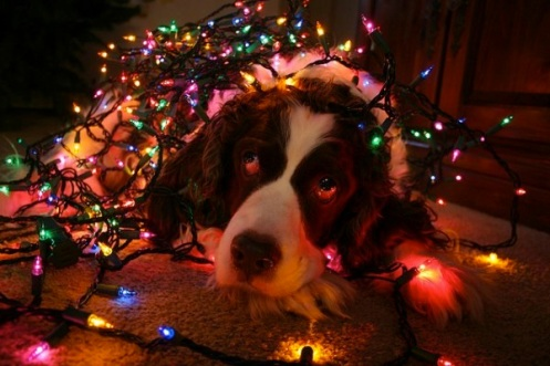 dog-christmas-fairy-lights-5